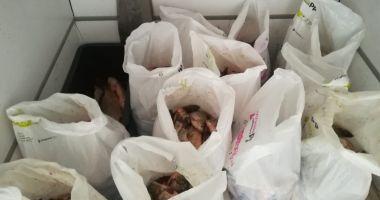 Sute de kg de peşte, confiscate de poliţiştii constănţeni