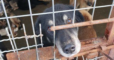 Adoptaţi responsabil! Animale fără stăpân aşteaptă să se integreze în familii iubitoare