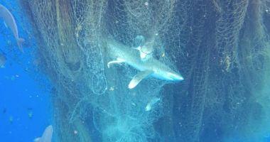 Plasele de pescuit ar putea fi interzise