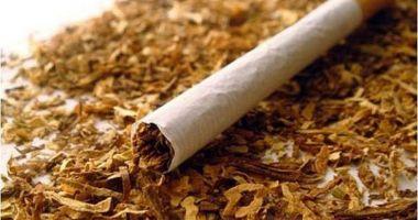 11,13 tone de tutun confiscate de inspectorii antifraudă