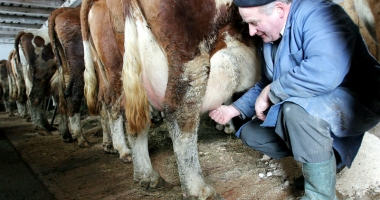 11.226 de producători de lapte primesc 5.448.041,5 euro