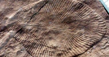 Savanții au confirmat care este cel mai vechi animal din lume