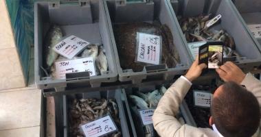 FOTO-VIDEO. Aţi cumpărat peşte din Piaţa Griviţei? E JALE CE A GĂSIT OPC-ul!