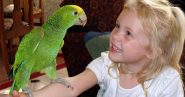 Cum stimulezi papagalul să devină vorbăreţ