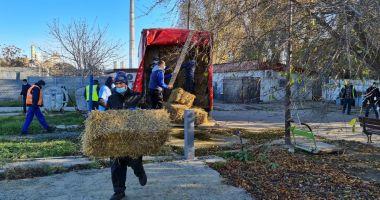 Adăpostul public pentru câinii fără stăpân a intrat în reparații capitale