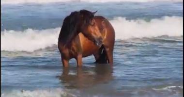 """Video. În vacanță pe litoral! Un cal a fost filmat """"răcorindu-se"""" în apele mării"""