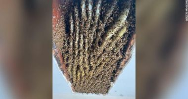 CNN: O femeie din SUA a descoperit în casa ei un stup de peste 100.000 de albine