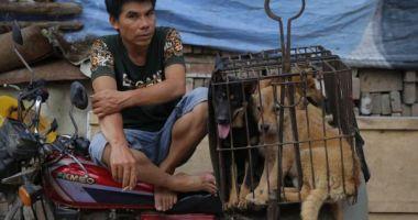 Consumul de carne de câine ar putea fi interzis în Coreea