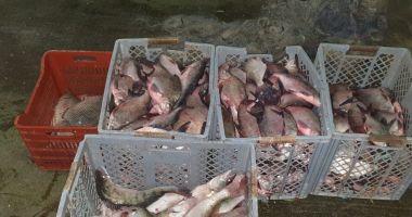 CAPTURĂ PE LAC. Sute de kilograme de pește, confiscate de Garda de Coastă