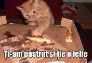 Alimente interzise pisicilor