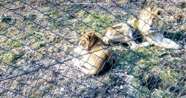 IMAGINI DE COȘMAR! Animale lăsate de izbeliște la zoo