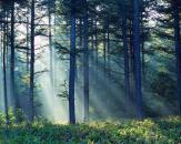 Criminalul din Băneasa, prins în pădure