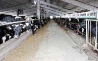 Crescătorii de bovine din Constanţa prevăd un an 2010 sumbru