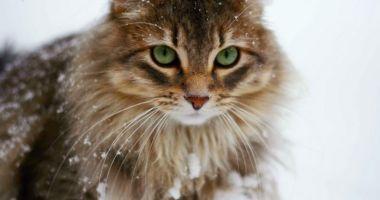 Recomandări pentru protejarea animalelor pe perioada frigului