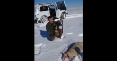 VIDEO INCREDIBIL! Un lup împuşcat s-a prefăcut mort şi a atacat un vânător