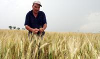 Fermierii constănţeni speră să obţină un preţ mai mare la cereale, în 2010