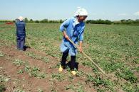 Criza economică a tăiat din veniturile agricultorilor români