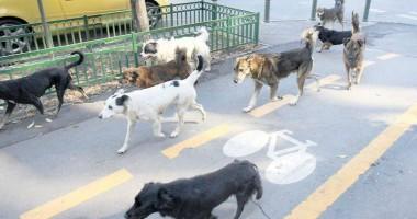 Guvernul a aprobat normele metodologice pentru aplicarea legii privind câinii maidanezi