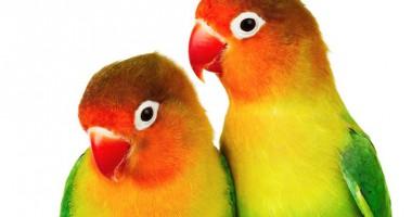 Trucuri pentru a ajuta papagalul să vorbească