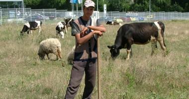 9.700 de crescători de animale nu vor mai achita debitele stabilite abuziv de camerele de conturi