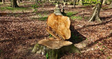 Moarte cumplită pentru un muncitor! A murit strivit de un copac pe care îl tăia