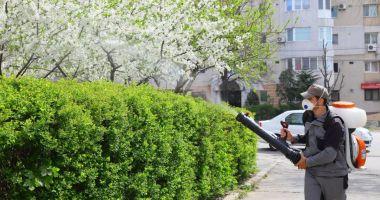 Acțiuni de dezinsecție în spațiile verzi din Constanța