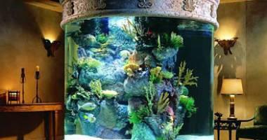 E bine să ai acvariu în casă?