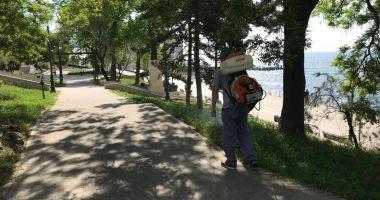Administrația locală din Constanța continuă acțiunile de dezinsecție