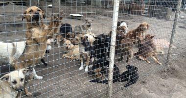 Administrația locală continuă campania de adopție a câinilor fără stăpâni