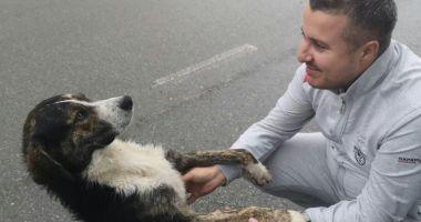 Câinele care a salvat un biciclist accidentat a fost adoptat