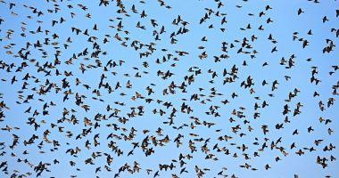 A început migraţia de toamnă a păsărilor