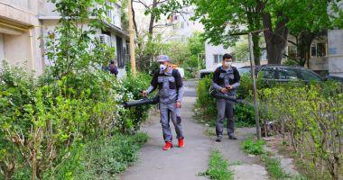 A început stropirea spațiilor verzi împotriva insectelor