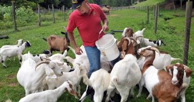 Ajutoare de minimis pentru fermierii constănţeni