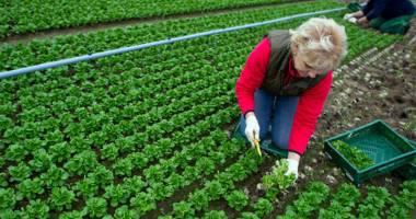 Ajutor de minimis pentru agricultura ecologică