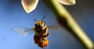 Cât eşti dispus să înduri, pentru a scăpa de durere? Terapia cu venin de albine alungă suferinţele