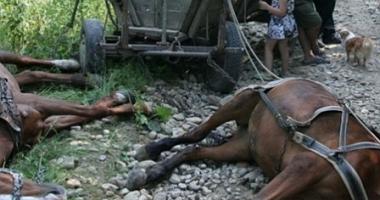 TRAGEDIE! Bărbat UCIS DE UN ROI DE ALBINE