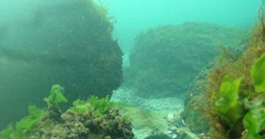 Alge toxice, descoperite în Marea Neagră. Substanțele ajung în alimentele românilor