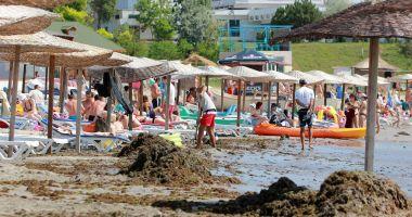 Algele din Marea Neagră ar putea fi folosite pentru producerea de fertilizatori pentru agricultură