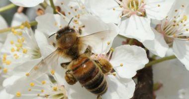 Albinele pot rezolva probleme simple de matematică
