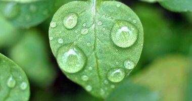 Apa de ploaie, recomandată pentru consum
