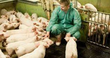 APIA eliberează adeverințe pentru crescătorii de animale care vor să ia credite