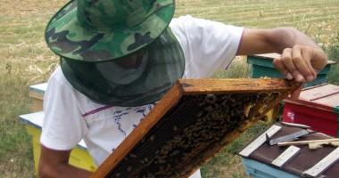 """""""Secretul"""" care face apicultura o afacere şi mai profitabilă"""