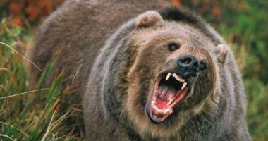 Femeie atacată de un urs în propria gospodărie. Soțul a ucis animalul cu toporul