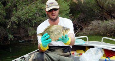 Atenţie la peştişorul de aur!