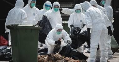 Alarmant! A apărut o nouă tulpină de gripă aviară, semnalată