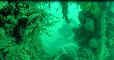 Cât de necesare sunt recifele artificiale, în Marea Neagră