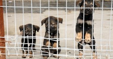 400 de câini pe lună, norma hingherilor la Constanţa. Maidanezii vor avea site de promovare