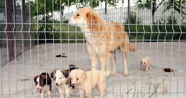 Primăria Constanța caută voluntari pentru câinii fără stăpân