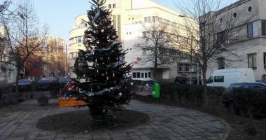 GALERIE FOTO / Un brad de Crăciun, împodobit cu fotografii ale victimelor din clubul Colectiv