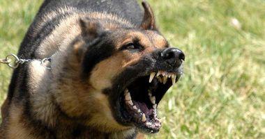 Despăgubiri de 4.300 de euro pentru un bărbat muşcat de câine